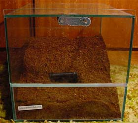 terarium for tarantula